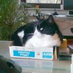 Mielchen The Cat